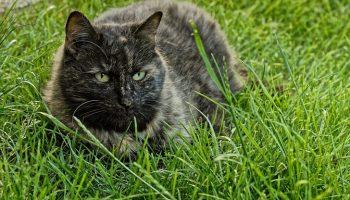 Почти год кормил одного бродячего кота. Спустя год он решил отблагодарить меня так, как могу только коты