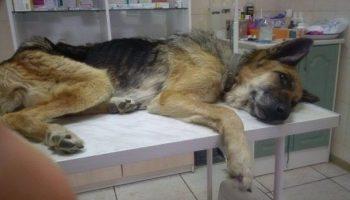 Хозяева оставили эту собаку на базе отдыха и уехали. Она прождала их несколько месяцев