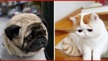 Как выглядит обижулька: животные, перед которыми вы точно очень провинились!