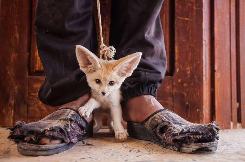 Проникновенные работы фотографов о преступлениях против дикой природы