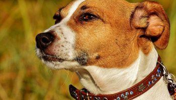Купила щенка — и потеряла подругу