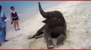 Этот слоненок впервые попал на пляж. Взгляните, как искренне он радуется этому!