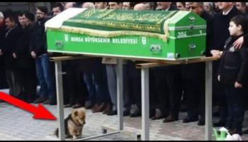 Песик с грустным взглядом присел возле гроба… Люди удивились тому, что случилось потом!