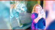 Эта беременная девушка захотела фото с тигром. Реакция дикой кошки «взорвала» Интернет!