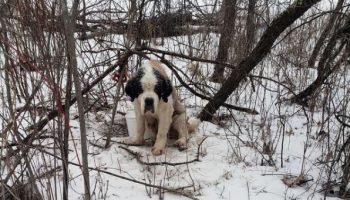 Бесчеловечно: Люди бросили старую собаку, привязанную к дереву в лесу
