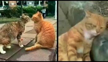 Кот увидел, что его любимая изменяет ему… Реакция пушистого растрогает вас до глубины сердца!