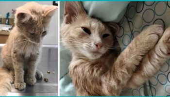 Человек, которому «разбили сердце», нашёл котёнка, просящего помощи…