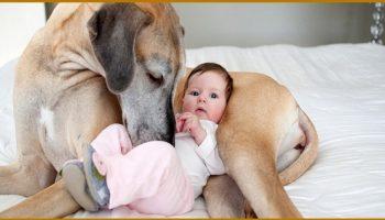 """""""И кто из них мать?"""" Эта собака 2 суток согревала брошенного на морозе ребенка и вот что случилось потом"""