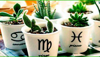 Необычный гороскоп счастливых растений принесет удачу каждому знаку Зодиака!