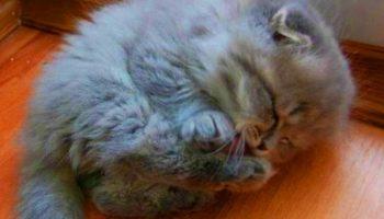 Старушка и представить не могла, какого кота она подобрала на улице и спасла!