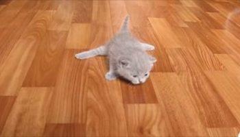Позитив и еще раз позитив — как маленькие котятки учатся ходить на лапках…