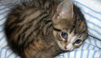 Женщина думала, что принесло домой котенка, а это оказался настоящий защитник дома