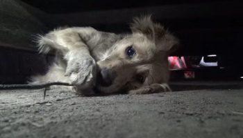 Песик был сильно напуган, он закрывал глаза как ребенок, когда за ним пришли спасатели