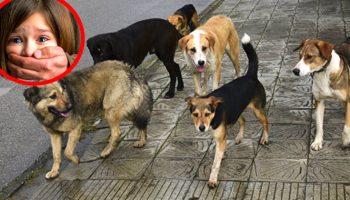 «Люди разбегались, как тараканы!». На помощь детям пришли бродячие собаки…