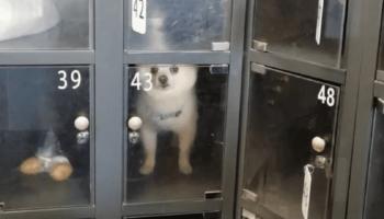 Люди оставляют в супермаркете в камере хранения своих собак