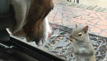 Забавная Белка ежедневно стучится в дверь  – а через 8 лет семья узнает, что белка хочет им что-то показать