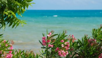 Пальмы, море, желтый песок… Как муж соседки на отдых один съездил