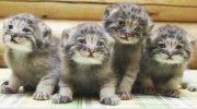 Фермер думал, что подобрал обычных котят, но когда они подросли, его ждал сюрприз