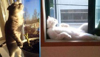 30 уникальных котов, которые любят солнце больше всего!