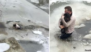 Мужчина прыгнул в ледяную воду, чтобы спасти собаку