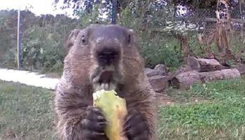 Мужчине пришлось установить камеру на участке, чтобы найти воришку овощей, но неожиданно влюбился в него