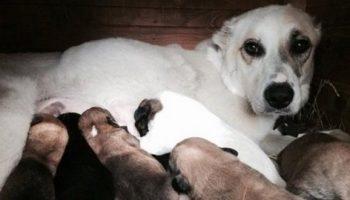 Нелюди бросили собаку в озеро, да еще привязали восьмерых щенят в качестве груза…