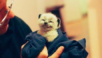 «В подвале, среди барахла и картонок, у серенькой кошки родился котёнок…»