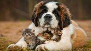 Самое милое создание: 10 самых добрых пород собак на свете!