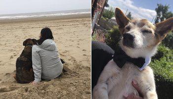 Медсестра на пенсии скрашивает старость собак, которые доживают последние дни