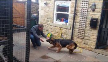 Трогательная встреча! Собака плачет от счастья увидев своего хозяина…
