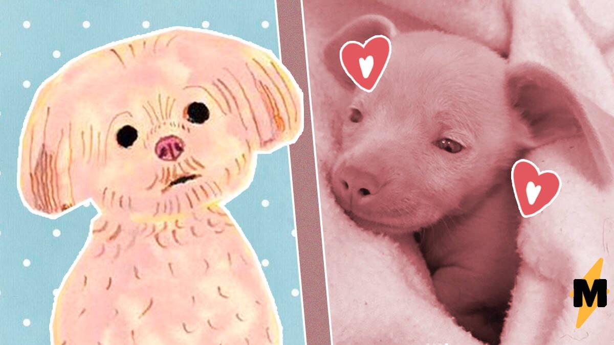 ✅Щеночек с милой кличкой Пятачок родился розовым и глухим, но это не испортило ему жизни