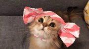 Мур-мур, кис-кис и «Стой! Куда ты лезешь?!!»: самые смешные приколы с котиками