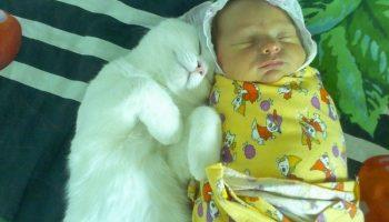 Фото показывающие, что домашние любимцы лучшие друзьями с маленькими детками