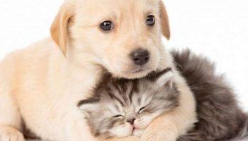 15 очаровательных фото о нежнейшей дружбе между котиками и собачками!
