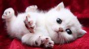 15 милых и потешных котят для поднятия настроения