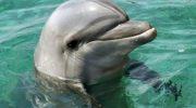 Мама дельфиненка отблагодарила рыбаков за то, что они спасли ее детеныша