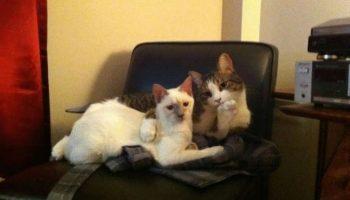 Котики, которые не ожидали, что вы вернётесь домой так рано…