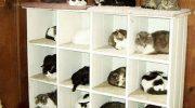 15 уморительных идей складирования и хранения котов: