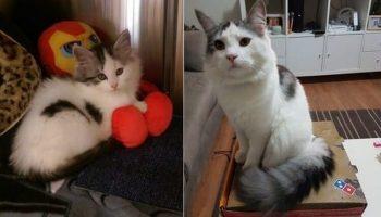 Котики, которые решили восстановить свои детские фото и показать всем, какими они были и какими стали…