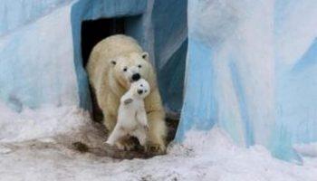20 очаровательных фото — Родители и дети в царстве животных