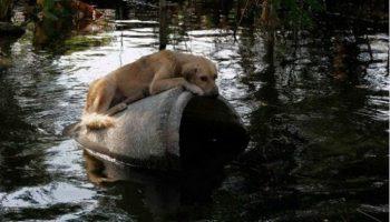 Очень справедливо: каждого, кто бросит животное в урагане, ожидает наказание от правительства…