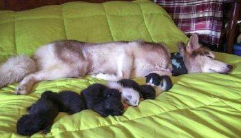 «Собака тащила меня в лес силой!» Пёс достал из коробки одного за другим 7 мокрых котят…