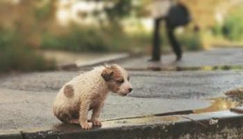 Ребенок принес с улицы домой дрожащего щенка в сосульках, а мама не смогла его прогнать