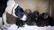 В 25-ти градусный мороз собака родила восьмерых щенков. Люди уже спешили спасти малышей!
