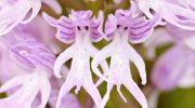 16 удивительных цветков, очень похожих на что-то другое