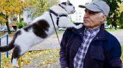 За кота Леву пенсионеру предложили полмиллиона рублей и автомобиль. «Детей не продаю» — ответил мужчина