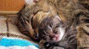 Кот Борька привёл в дом уличного котёнка, после чего возомнил себя папой, или мамой.