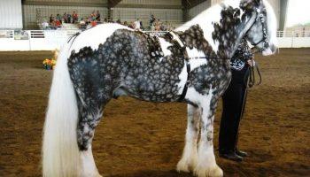 Снимки самых красивых и грациозных пород лошадей