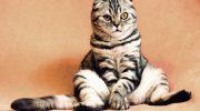 Семья у нас не большая: я, жена, дочь и кастрат котяра весом что то около 16 кг