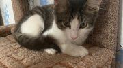 Три месяца котенок не верил, что еда не закончится. Малыш сам нашел себе дом и стал счастливым